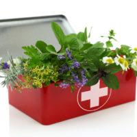 Les plantes sauvages au service de nos douleurs et de notre santé 2